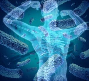 microbioma bodybuilding