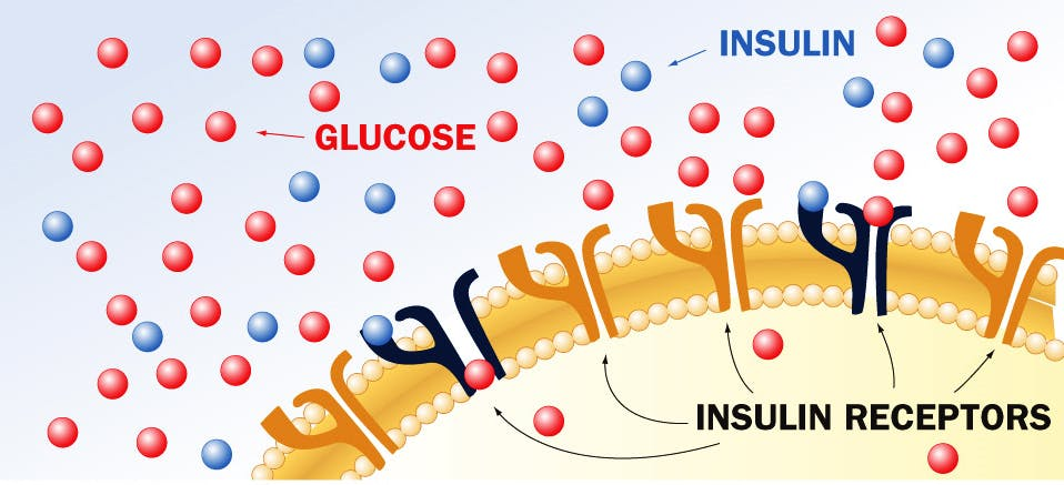 flessibilita metabolica