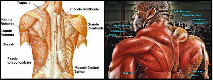 allenamento schiena