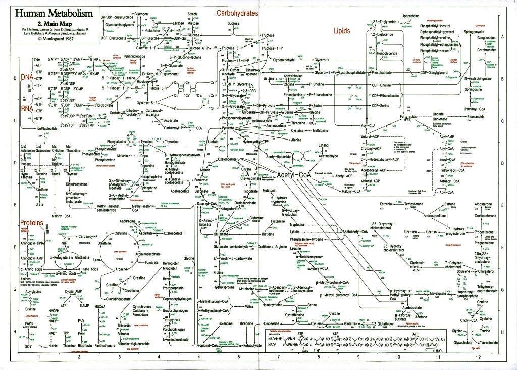 metabolismo carboidrati